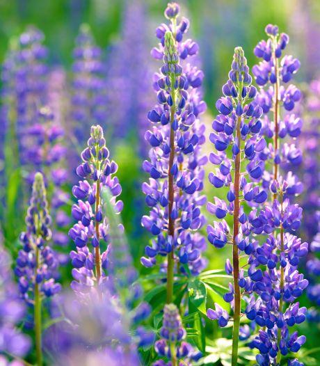 Soms bloeien planten met de rem erop, maar welke?