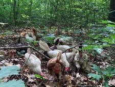 Tientallen dieren gedumpt in tuin van bruidspaar: 'Dit is geen geintje'