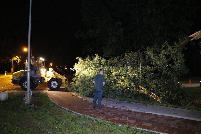In Gennep haalde de gemeente een boom van een oprit.