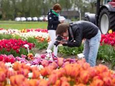 Autoroute van 88 kilometer langs tulpen in Noordoostpolder: 'Uitstappen voor een foto? Blijf dan niet hangen'