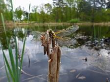 372 gedichten over stilte voor poëziewedstrijd Grenspark Kalmthoutse Heide