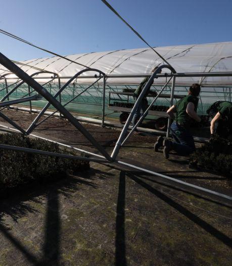 Gezocht in Eindhoven: balkons en tuinen voor 120.000 plantjes