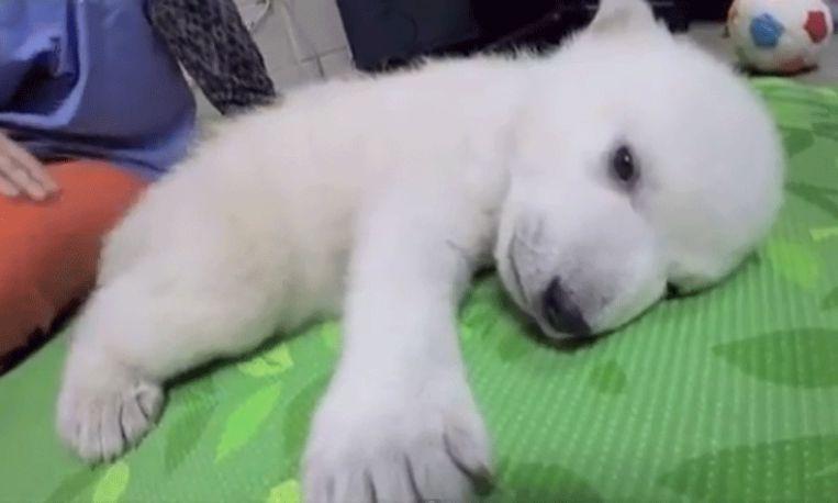 Lief! De eerste 83 dagen van ijsbeertje Nora