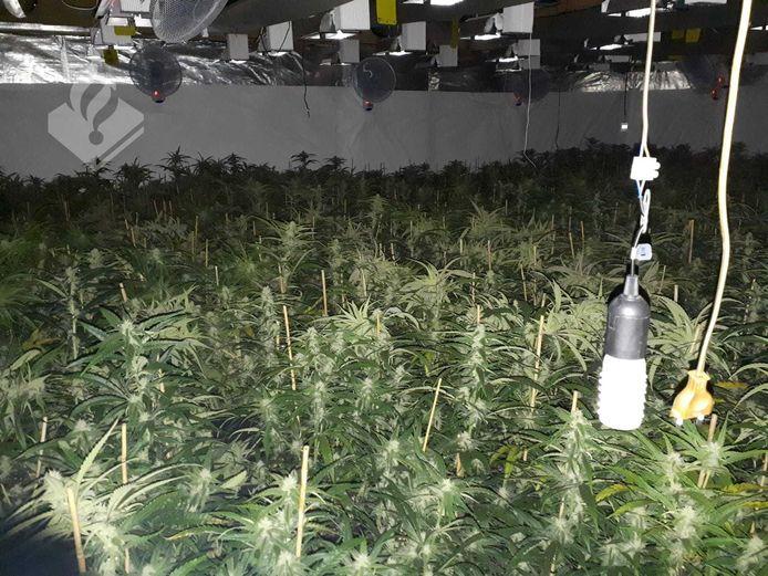 Wietplantage in Delden