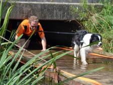 Baasje en hond over survivalparcours