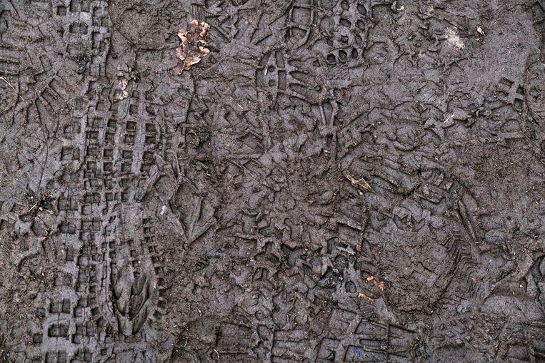 De ooit groene paden zijn een archief van voetsporen in de Vinderhoutse bossen. Beeld Tim Dirven