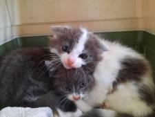 Commotie in centrum Emmeloord: brandweer gaat dakterras op na gevallen kitten
