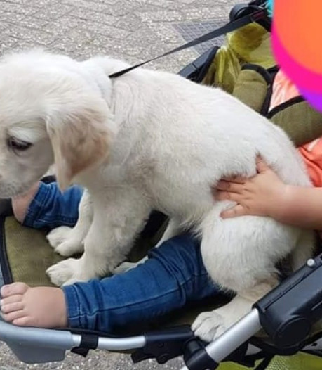 Gezin uit Zonnemaire in zak en as na diefstal puppy Pip