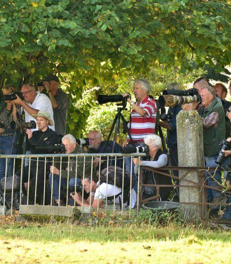 Honderden vogelaars strijken neer bij zeldzame hop in weilandje Waddinxveen
