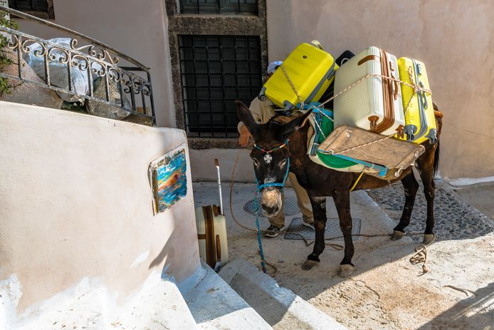 De zwaargeladen ezels moeten de steile steegjes van Santorini dagelijks trotseren.