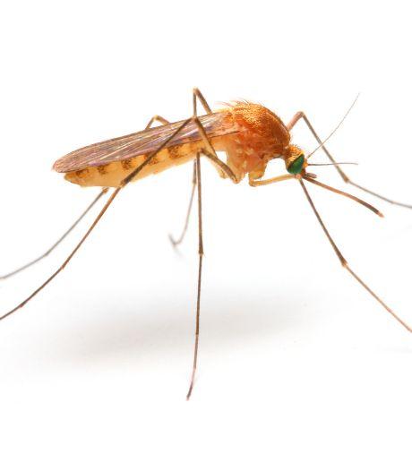 'Grote doorbraak' in onderzoek naar malariavaccin