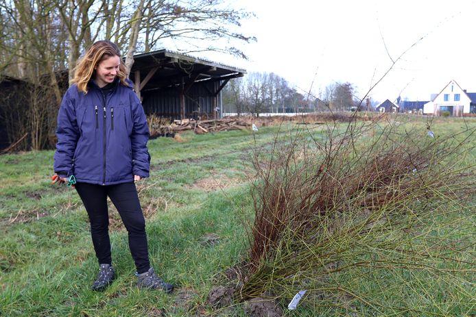 Sanne Elenbaas uit Rockanje neemt zaailingen in ontvangst om er een bos mee aan te planten.