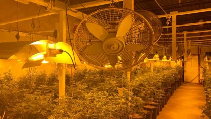 Eigen kweek in 't echt: moeder trekt haar man en twee zonen mee in cannabishandel