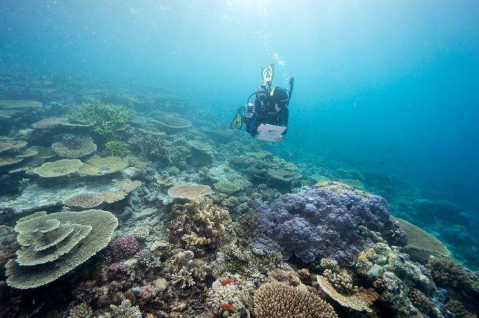 Het Great Barrier Reef in Australië dreigt op de lijst van bedreigd werelderfgoed te komen.