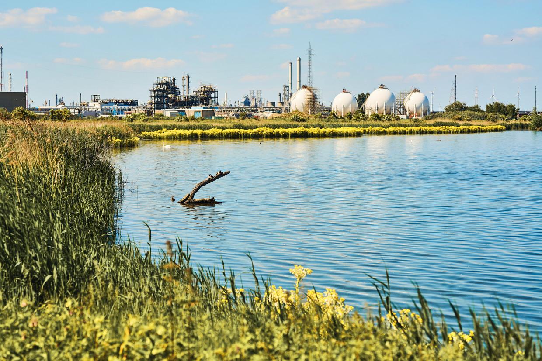 De PFOS-bodemvervuiling situeert zich in de omgeving van de fabriek van 3M in Zwijndrecht. Beeld Thomas Nolf