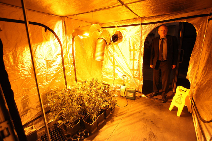 Jan Boelhouwer in een nagebootste wietplantage.