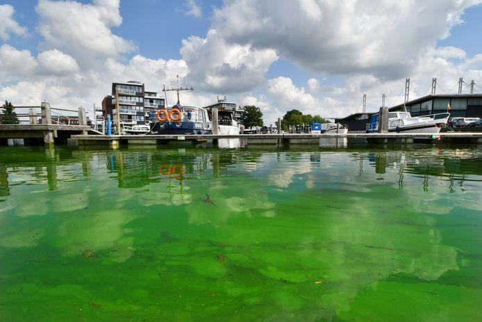 Het water in de Almelose haven ziet er alles behalve schoon uit: blauwalg is de boosdoener.