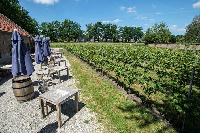 De wijngaard van het klooster Sint-Catharinadal.