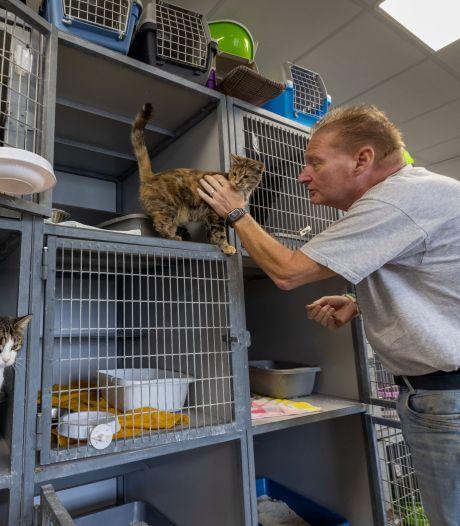 Dierenambulance Noordoostpolder gaat strijd aan met kattenoverlast: 'Ware plaag op platteland'
