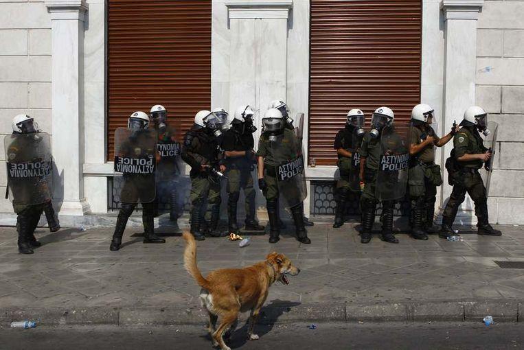 Loukanikos op 5 oktober 2011, toen een groot deel van Griekenland 24 uur staakte. © Reuters Beeld