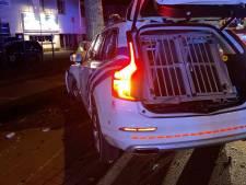 Verdriet bij Belgische politie: twee politiehonden overlijden bij crash aan Nederlandse grens