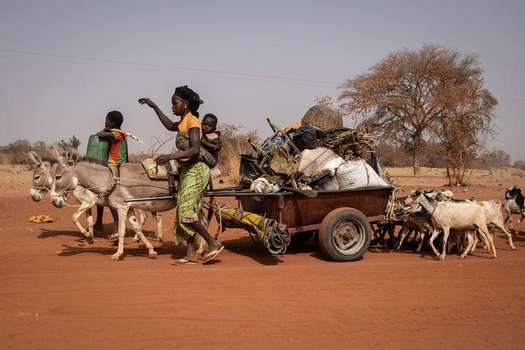 In Burkina Faso zijn meer dan 700.000 mensen op de vlucht met hun huisraad en vee om te ontsnappen aan het geweld dat het land teistert.  Beeld OLYMPIA DE MAISMONT / AFP