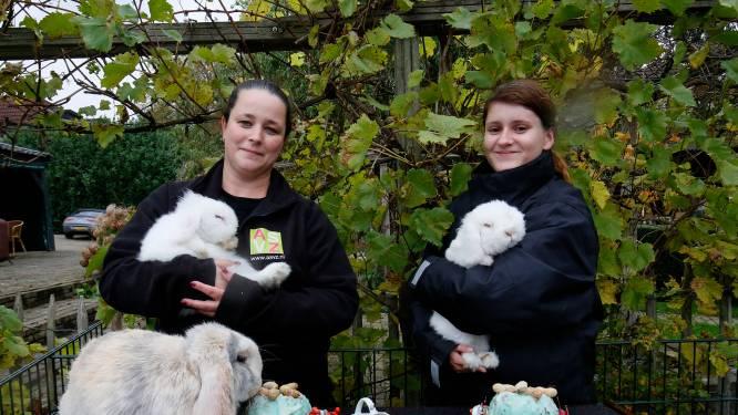 Konijnen knuffelen om rustig te worden in de nieuwe konijnenweide van Vuren
