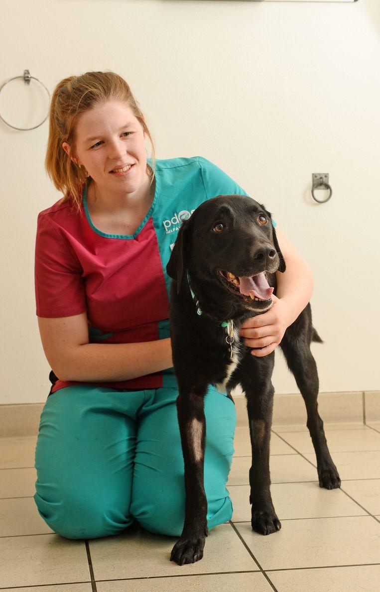 Marley moest twee operaties ondergaan opdat alle lintjes uit zijn maag verwijderd konden worden.