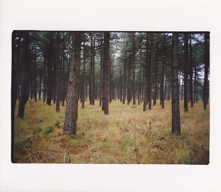 'Forest', een foto die designer Maarten Van Severen in 2002 tentoonstelde in de galerie van Johan De Coker. Beeld rv Maarten Van Severn