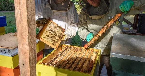 Na Brand En Vernieling Is Het De Vraag Of Bijen Place To Bee