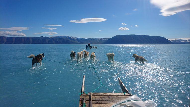 Olsen, een Deense klimaatonderzoeker, nam vorige week een prachtig beeld aan de inham Inglefield Bredning op Groenland. Daarop zijn sledehonden te zien die door ijswater moeten lopen. Eigenlijk zou daar een grote ijsvlakte moeten zijn, maar door de klimaatverandering is dat gesmolten. Olsen moest, samen met lokale jagers, door een groot gesmolten meer lopen om meetapparatuur te verzamelen. Beeld AP/STEFFEN M. OLSEN
