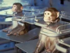 Dieselgate 2.0: des singes forcés de respirer les gaz d'échappement