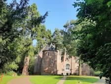 Sequoia bij kasteel Nederhemert in de race voor Boom van het Jaar