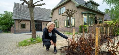 Operatie Steenbreek is begonnen: 'In tuintjes kun je met klimplanten de hoogte ingaan'