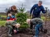 Adoptiekerstboom razend populair in Utrecht: nu terug de grond in, met kerst weer ophalen