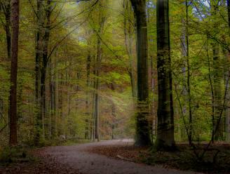 "Op huizenjacht in... Buggenhout: ""Nabijheid van bos als groene long is grootste troef"""