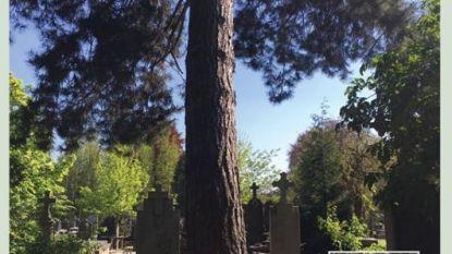 Herdenkingsplek voor Ben De Cat op oude begraafplaats