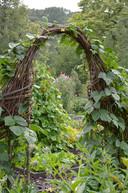 Wilgenstokken hebben de neiging om weer te beginnen groeien, en krijgen dan ineens blaadjes