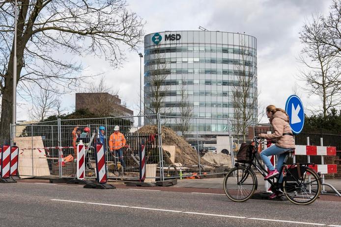 De werkzaamheden van MSD aan de Molenstraat in Oss.