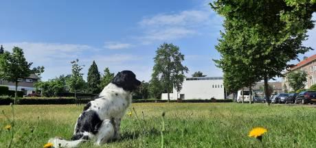 Den Bosch maait gras in parken minder vaak: goed voor bloemen, vlinders en portemonnee