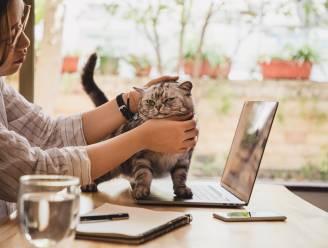 """Houdt je kat stress of zelfs een depressie over aan de pandemie? Dierendokter: """"Ik zag meer katten met kwaaltjes zonder duidelijke oorzaak"""""""