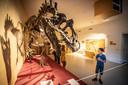 Imposante skeletten van dino's zijn te zien bij Natura Docet.