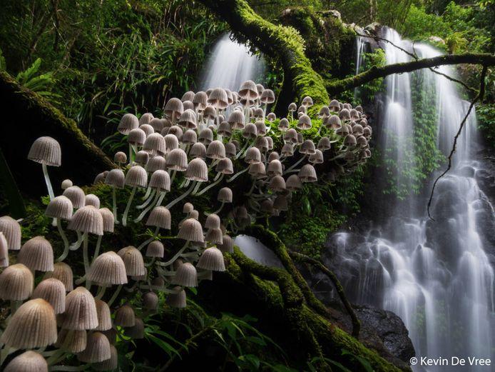 Met de foto 'Enchanted forest' (Betoverd bos) behaalde Kevin De Vree uit Erpe goud in de categorie 'Botanisch' van de Australian Geographic Nature Awards.