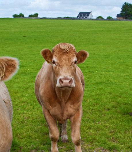 Waarom een biefstukje uit de VS anders smaakt dan uit Ierland