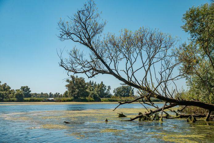 Beeld uit De Biesbosch, één van de kwetsbare natuurgebieden in de provincie Noord-Brabant die te lijden heeft onder de stikstofuitstoot. Net als onder meer de Loonse en Drunense Duinen en de Groote Peel.