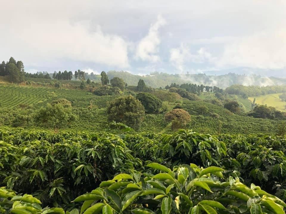 De koffieplantage Gaia Estate van het bedrijf Gaia Artisan Coffee in Costa Rica, van Scholls schoolvriend Fernando Altmann.