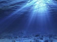 Alarmerend rapport: Leven in oceaan in 40 jaar gehalveerd