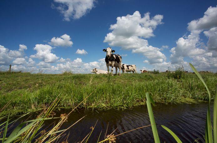 De veelgeroemde polders van de Krimpenerwaard, met hier polder de Nesse in Ouderkerk aan den IJssel,  onderdeel van het Nationaal Landschap het Groene Hart.