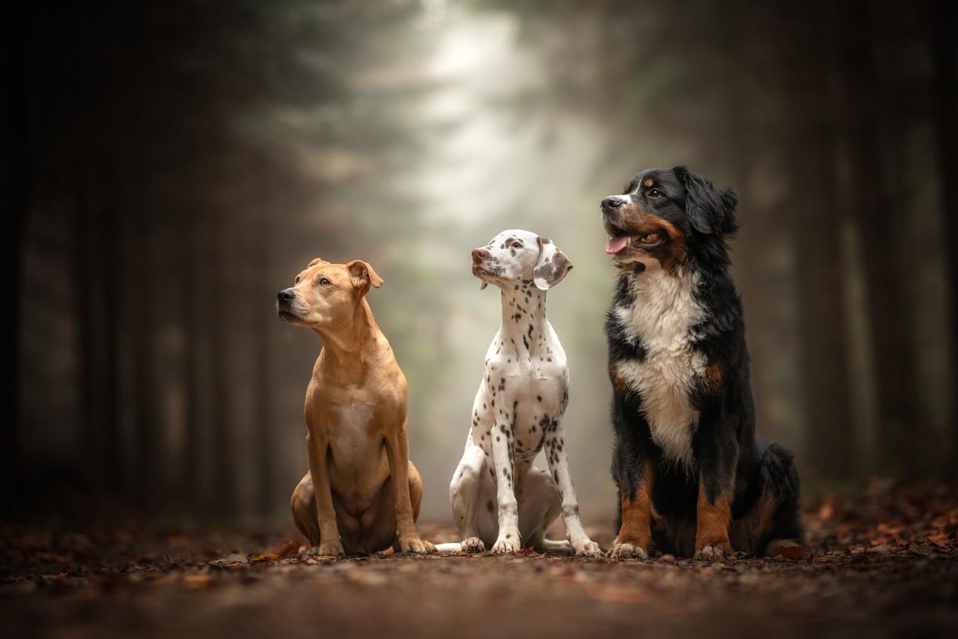 Honden moeten voortaan aangelijnd in het bos, behalve in de losloopgebieden.