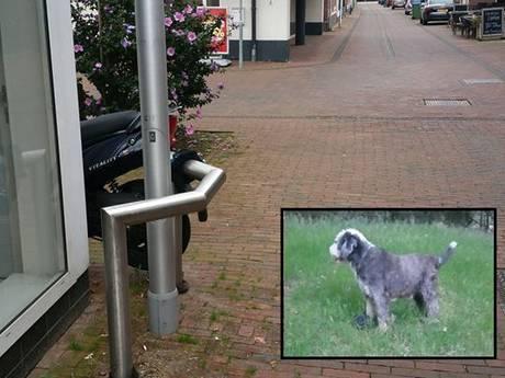 Meegenomen hond Jip uit Ede teruggevonden op industrieterrein